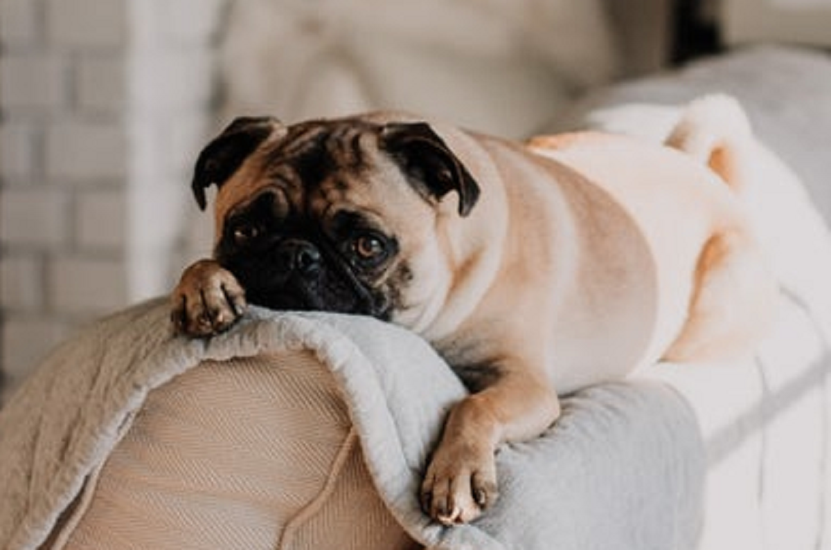 Why Overnight Pet Sitting is the Best Option for your Pets