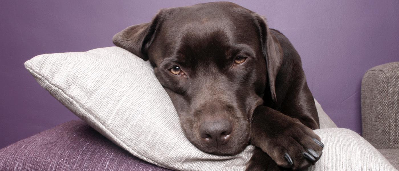 Dog Waiting fo Pet Sitter